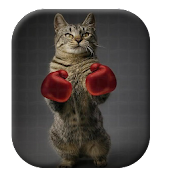 Boxing Cat Live Wallpaper Free