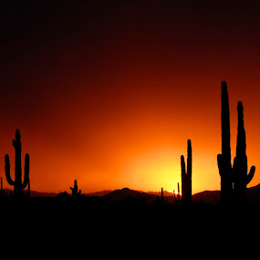 Desert Gardens by Robert Remacle - Landscapes Sunsets & Sunrises (  )