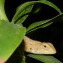 Wood Lizard