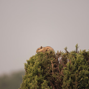 Lonesome Squirelling by Mitrava Banerjee - Animals Other Mammals