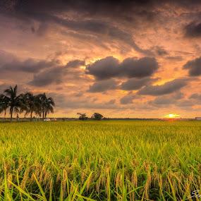 Sunset at Paddy Field by Stephen Ckk - Landscapes Sunsets & Sunrises