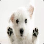 Hund erziehen