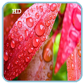 S6 Rain Drop HD LiveWallpaper