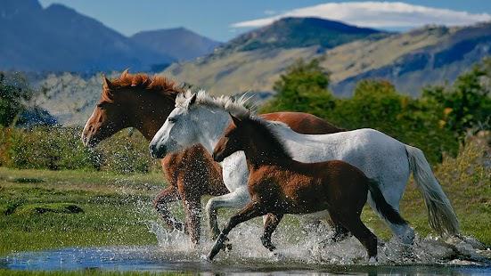 馬的動態壁紙
