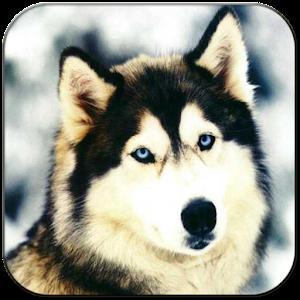 狗屏幕鎖定 娛樂 App LOGO-硬是要APP