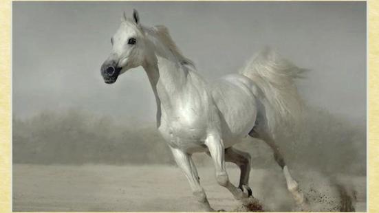 玩娛樂App|馬背景免費|APP試玩