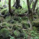 Nettle tree