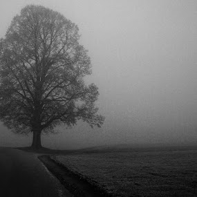Tree in fog by Matevz Skerget - Black & White Landscapes ( b&w, tree, fog, street, bw )