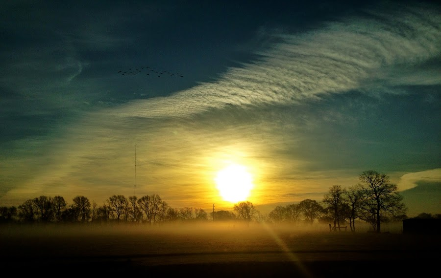 Sunrise over the fog by Zeralda La Grange - Instagram & Mobile iPhone ( #landscape, #nature, #field, #sun, #fog, #sunrise )
