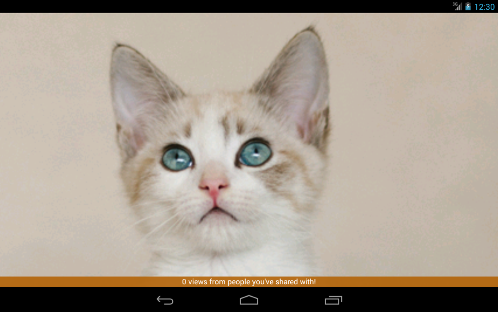 Cat of the Day- screenshot