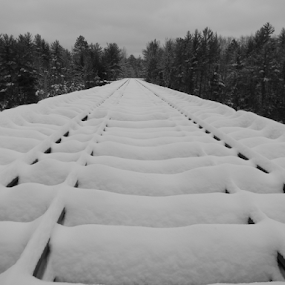 Untouched Snow in Nature by Jason Asselin - Landscapes Weather ( michigan, snow, trees, bridge, snow covered, black & white, macro )