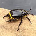 Black Yellow Besouro