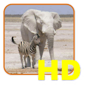 Safari List HD - South Africa