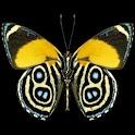 3D butterfly 2 logo