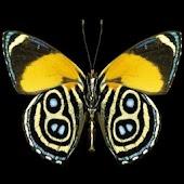 3D butterfly 2