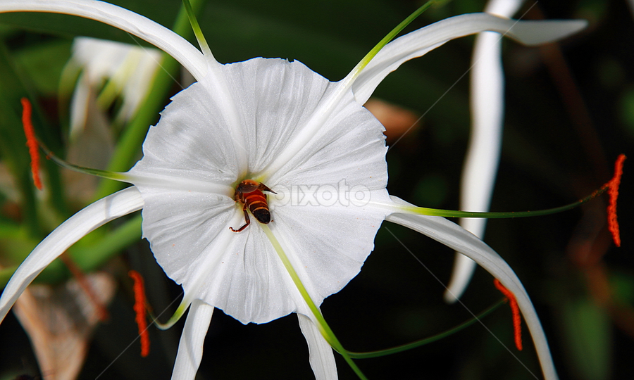 by Shrikrishna Bhat - Flowers Flower Gardens