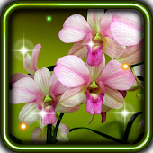 Orchid Amazing live wallpaper