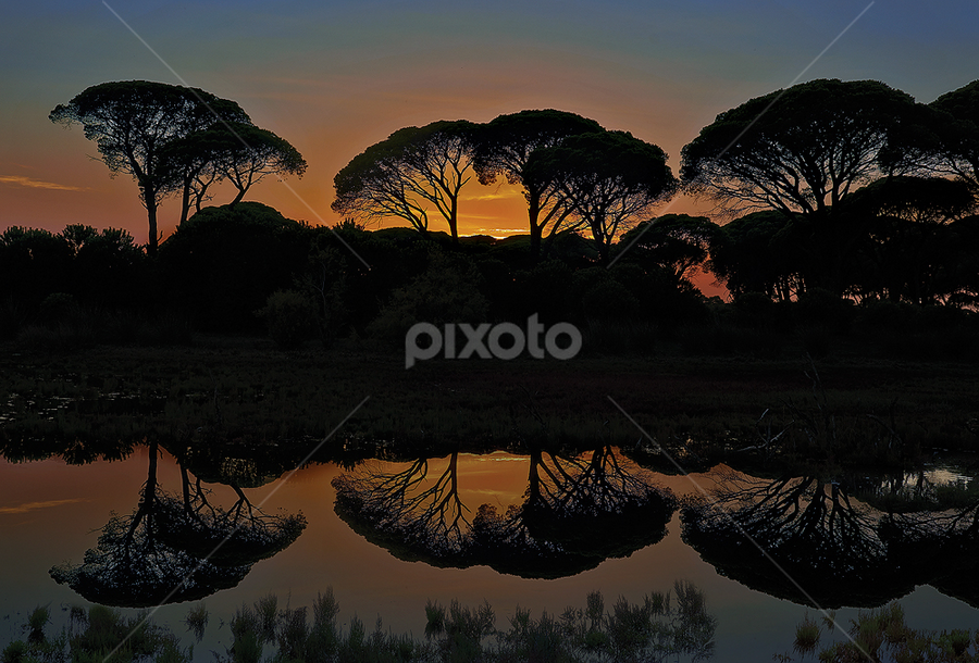 by Dimitrios Lamprou - Nature Up Close Trees & Bushes ( strofilia, tree, sunset, greece, forest )
