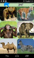 Screenshot of Animal sounds.