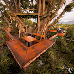 the bird nest by GUILLAUME FUNFROCK - Buildings & Architecture Bridges & Suspended Structures ( tree, wood, banyan, tree house, house )
