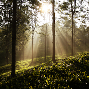 by Dhruv Ashra - Nature Up Close Trees & Bushes