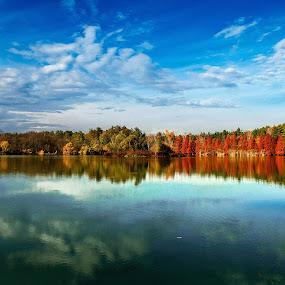 by Nedelcu Valeriu - Landscapes Forests ( mood factory, color, lighting, moods, colorful, light, bulbs, mood-lites )