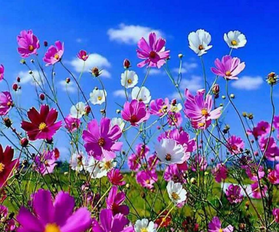 beautiful flower  android apps on google play, Natural flower