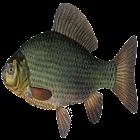 PescandoRio icon