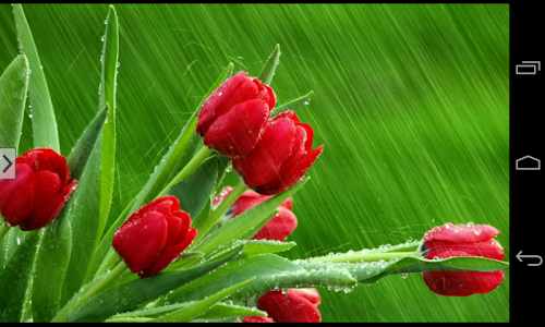 Beautiful Flowers Wallpapers screenshot 18