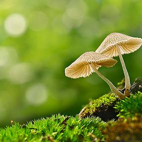 by Suhaimi Azzura - Nature Up Close Mushrooms & Fungi ( mushroom, nature, natural )