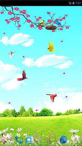 Sky Birds Live Wallpaper Free