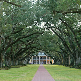 Oak Alley Plantation by David Montemayor - Buildings & Architecture Public & Historical (  )