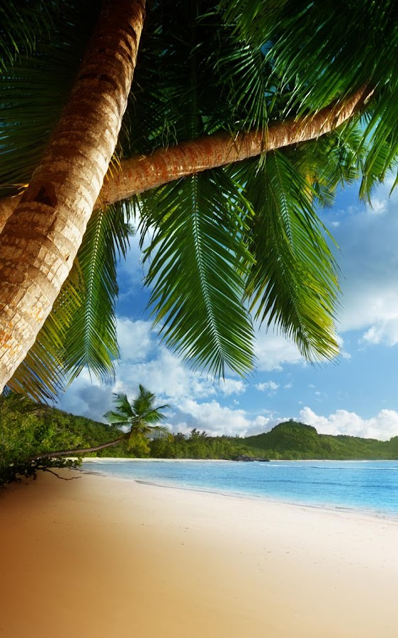 Tropical beach live wallpaper android apps on google play - Palm tree wallpaper for android ...