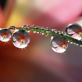 :: Shine :: by Dedy Haryanto - Nature Up Close Natural Waterdrops (  )