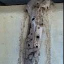 Mud Dauber nest?