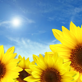 Good Day Sunshine by Robert Daveant - Flowers Flower Gardens ( Hope )