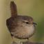 Bird Atlas Recording Software