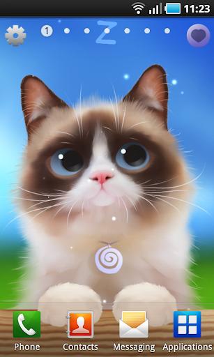 Shui The Kitten