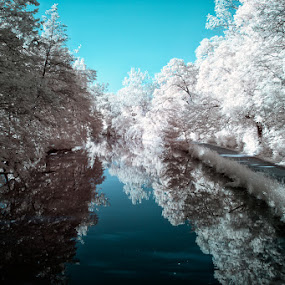 Illinois & Michigan Canal by Jay Anderson - Landscapes Waterscapes ( stream, infrared, canal, river )