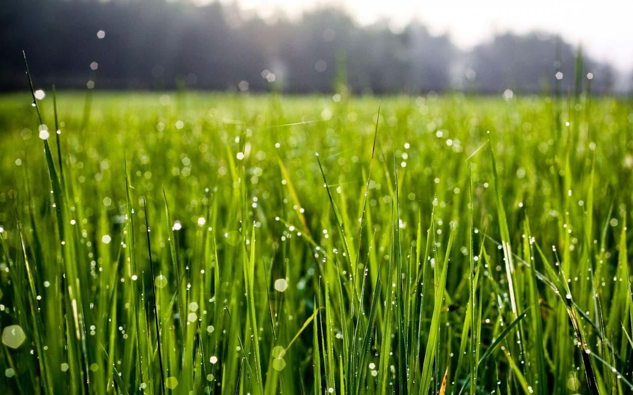 IOS 7 Rain Drops Green Grass - screenshot