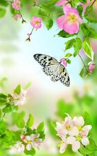 Šetrné Květy Živá Tapeta - náhled