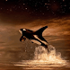 Whale Watch Live Wallpaper