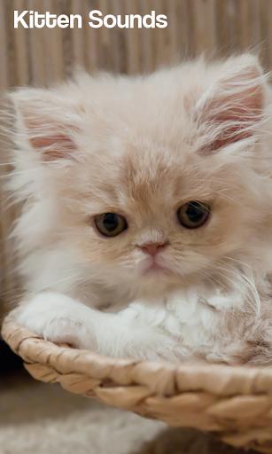 Kitten Sounds