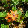 Orange flower?