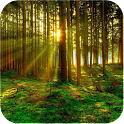 Green Forest Wallpaper icon