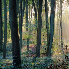 A Beautiful Run by Ceri Jones - Landscapes Forests ( trees, forest, sunrise, sunlight, morning, run, woods, light, jogger )