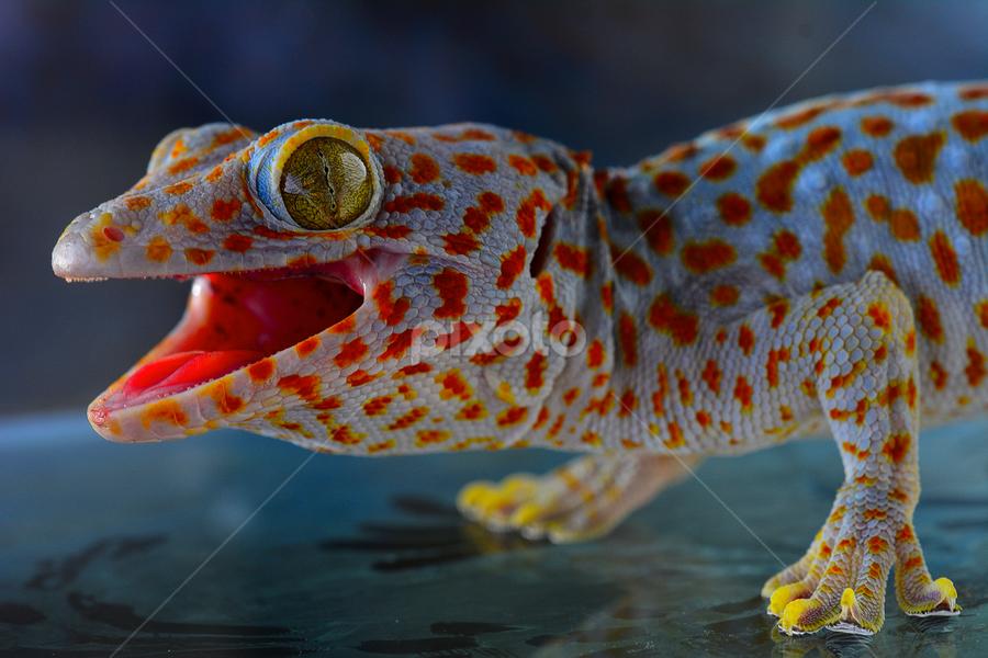 by Ajar Setiadi - Animals Reptiles ( , #GARYFONGPETS, #SHOWUSYOURPETS )