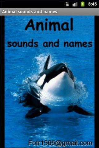 Joey4Kids: Animals