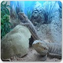 Bearded Dragons As Pets icon