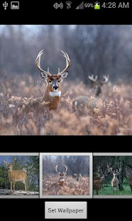 HD Deer Wallpapers- screenshot thumbnail